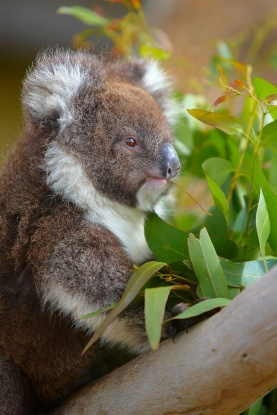 great ocean road photo essay throw in the rainforests and a few cuddly koalas and you have a complete adventure for the photographer