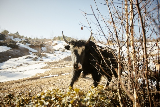 Yunnan Beyond the Yaks