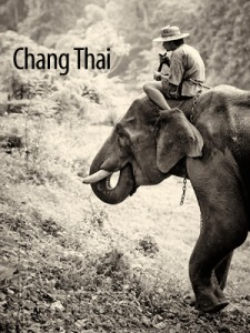 Elephants of Chiang Dao